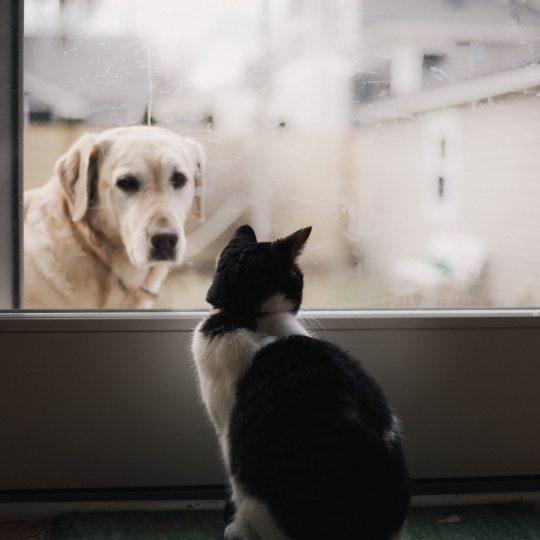 Pet Space